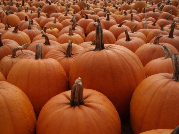 Performance Anxiety and Pumpkins
